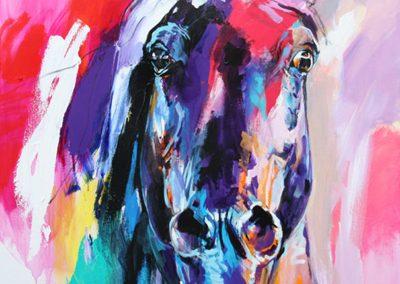 Cavallo 14