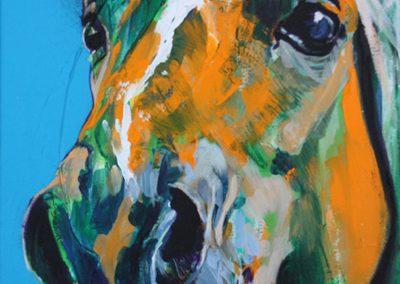 ○ Cavallo 6