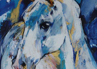 Cavallo 2