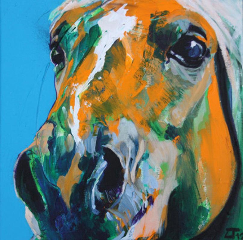 Cavallo 6